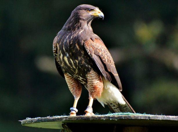 World Center For Birds Of Prey Hosts Many Raptors Near Boise