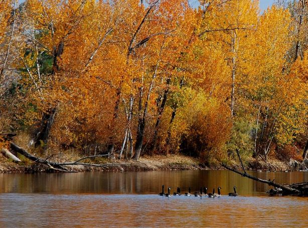 Boise River From The Greenbelt During Fall