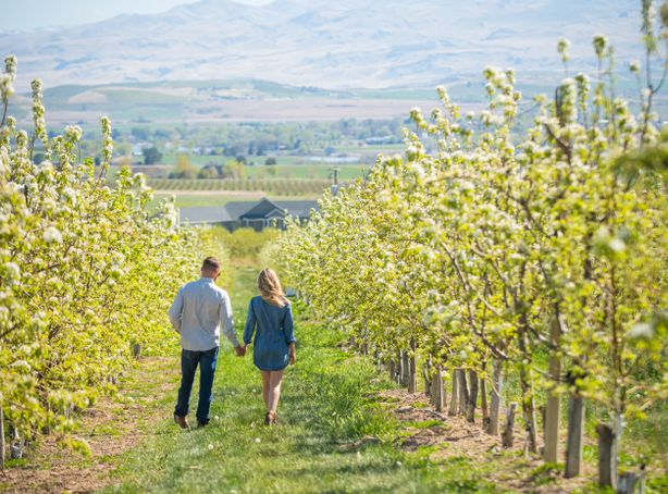 A couple walks through a orchard of blossoming trees