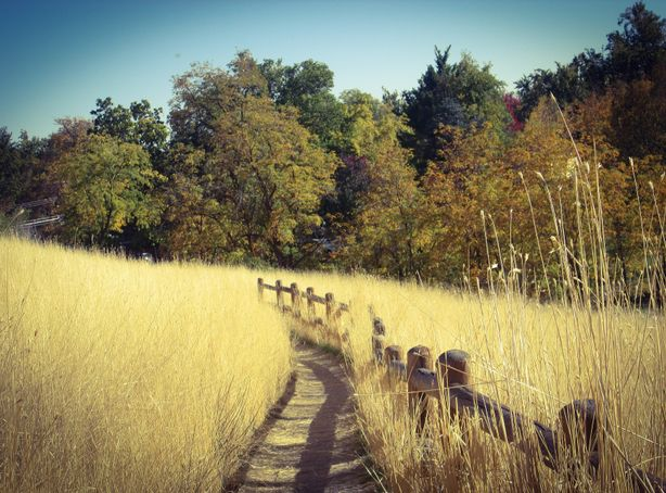 A dirt trail with a wooden fence along one side cuts through the tall, yellow grass of the foothills