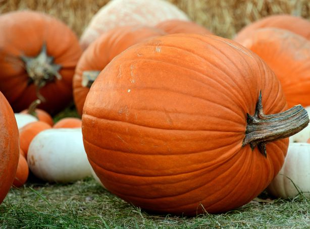 Linder Farms is a must visit during the fall to explore the corn maze and pick some of the best pumpkins around.